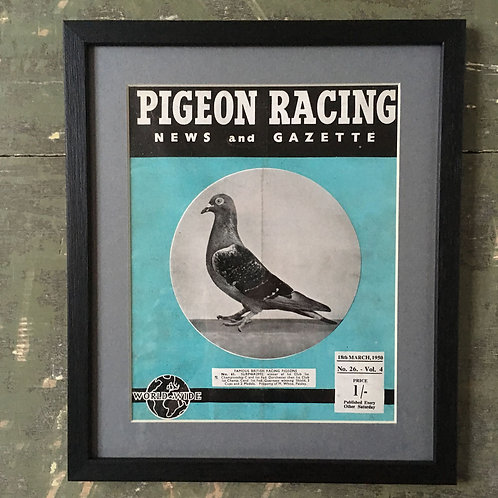 NOW SOLD - Vintage racing pigeon print - No.61 Surp46R2992