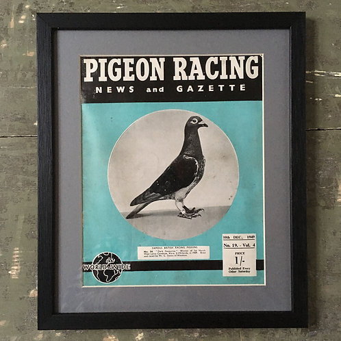 NOW SOLD - Vintage racing pigeon print - No. 54 'Dark Favourite'