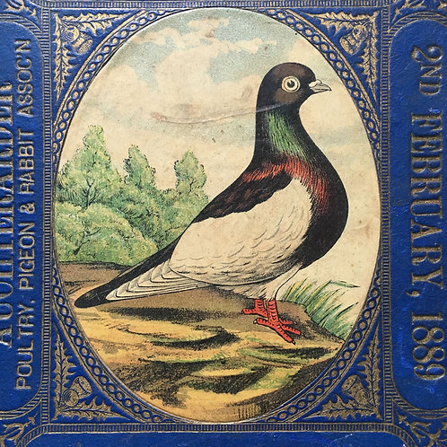 NOW SOLD - Victorian prize pigeon award - Magpie