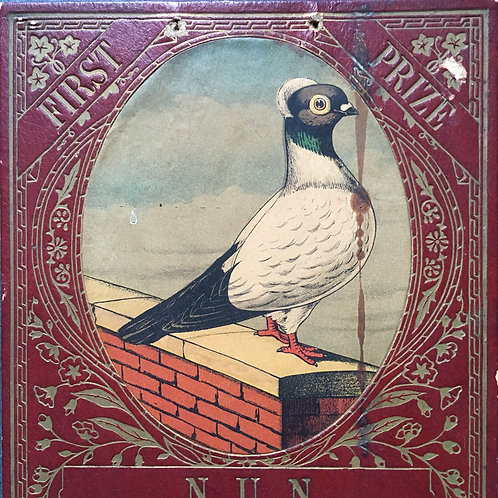 NOW SOLD - Victorian prize pigeon award - Nun