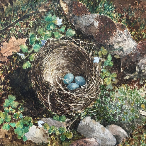 NOW SOLD - Victorian bird's nest watercolour painting