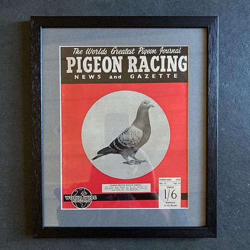 Vintage racing pigeon print - 'Murray' No.11