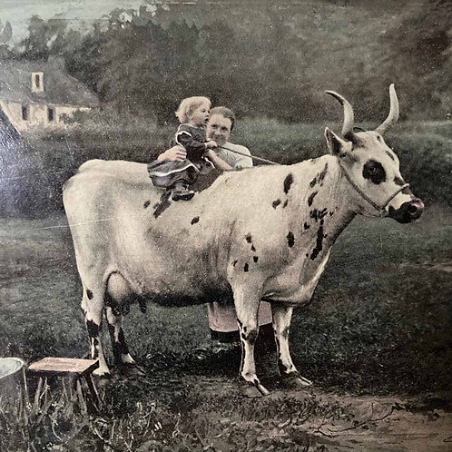 SOLD - Vintage rural photograph - cow