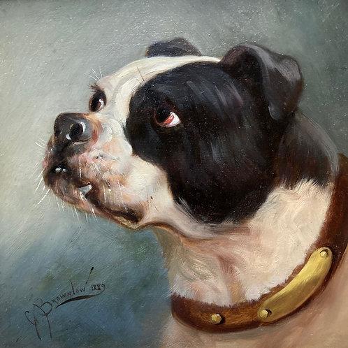 19th C. bulldog oil portrait