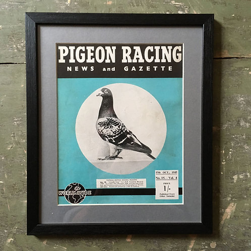 NOW SOLD - Vintage racing pigeon print - No. 50 'Greedy Guts'