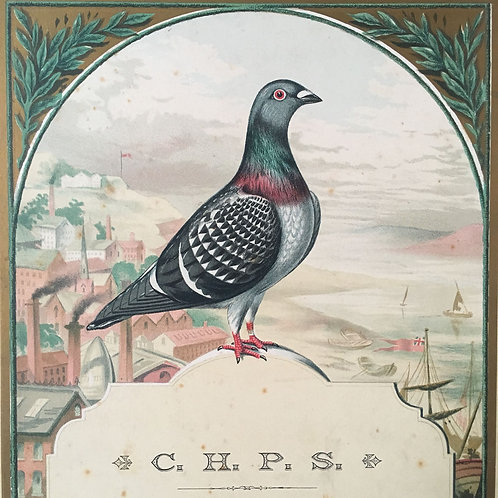NOW SOLD - Victorian racing pigeon print by Ludlow, 1896