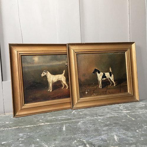 NOW SOLD - Pair of fox terrier oil paintings