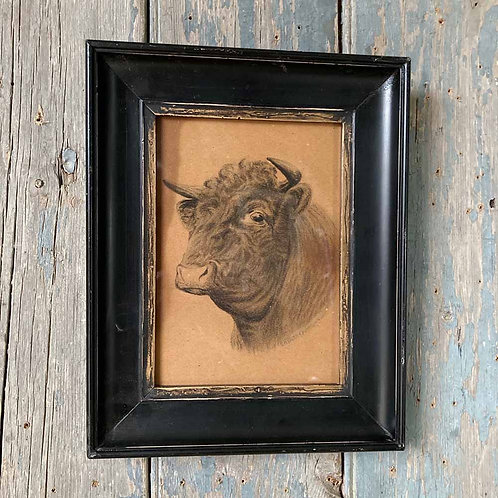 SOLD - Edwardian bull drawing