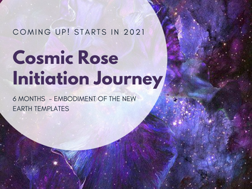 The Cosmic Rose - 6 months Journey