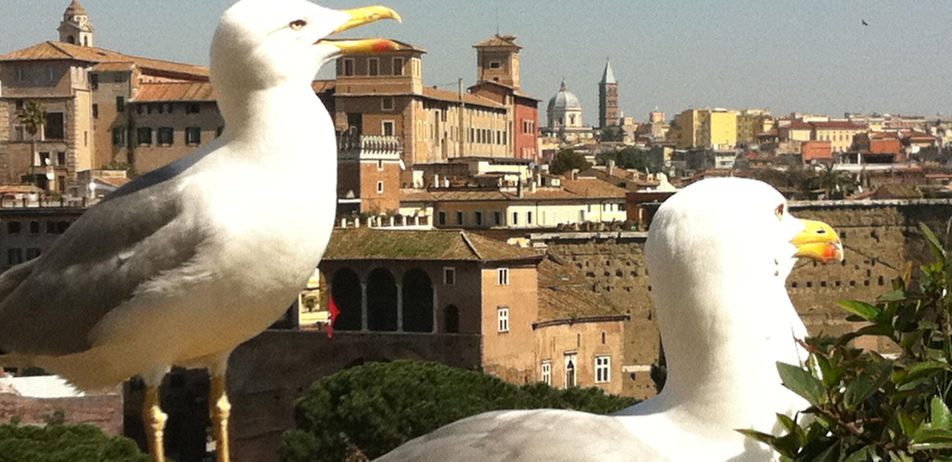 Gemütlicher Spaziergang zu den schönsten Aussichtspunkten Roms