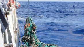 Why it is so important to free oceans of waste?