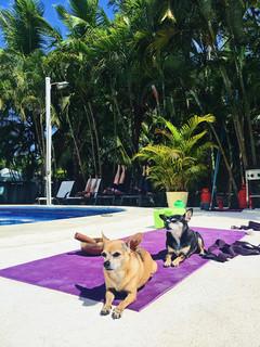 Doggy Yoga