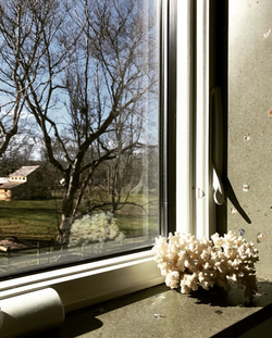 MotherOfPearl_WindowSill