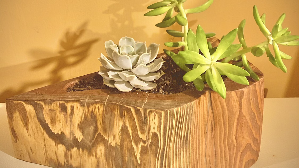 Natural wood planter with life plant included