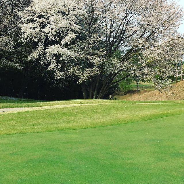 春の矢吹ゴルフ俱楽部