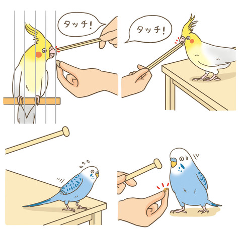 東京書店「鳥ぐらし」