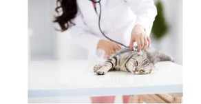When was the last time your cat went to the vet?