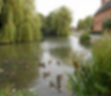 The Duck Pond in Willoughby Warwickshire