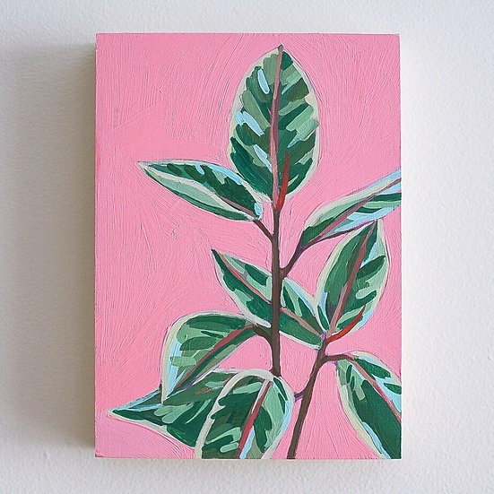 "FICUS ON PINK 5""x7"""