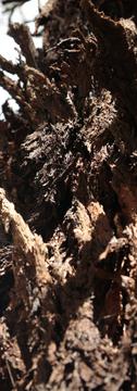 Really grungy bark