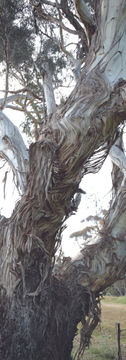 """Bee Tree"""