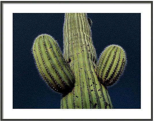 Cactus In The Moonlight 2 Framed