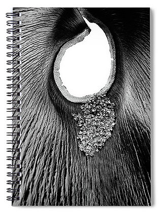 Palm Seed Notebook