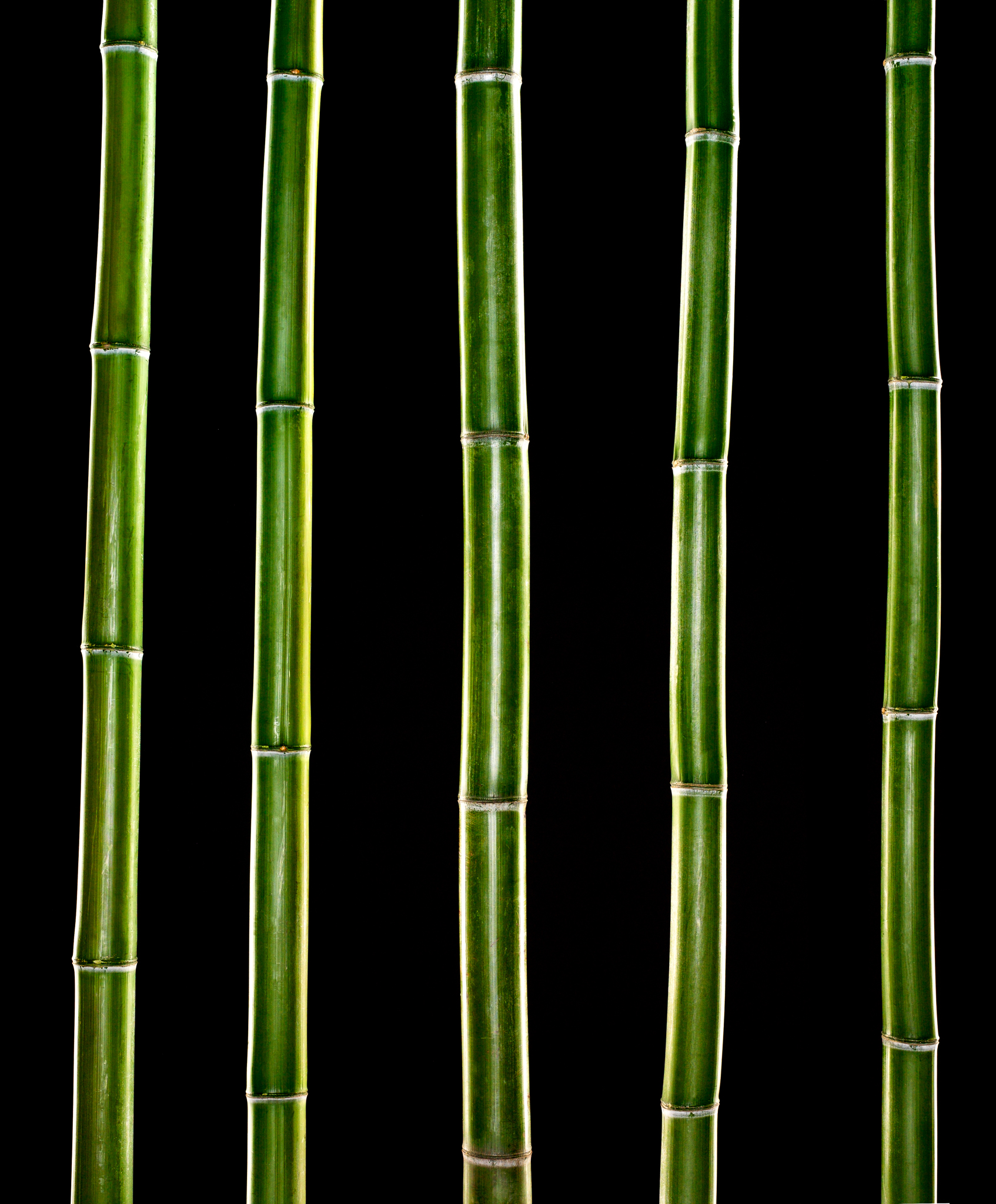 white_bamboo-plates_0023v1