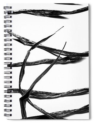 Frons On White Notebook
