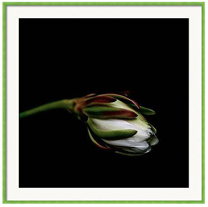 Cactus Flower Custom Framed Print