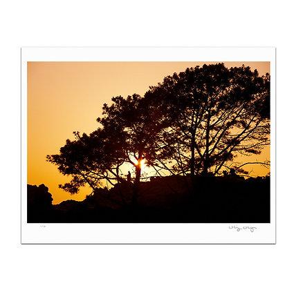 Solace At Corona Del Mar Print