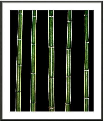 Bamboo Bars Framed