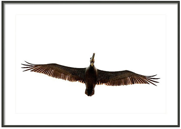 Full Flight Framed