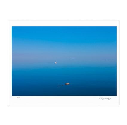 Lone Swan Print