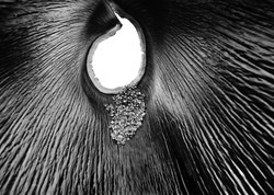 palmseed_v2