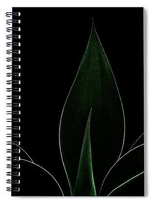 Agave Attenuata Notebook