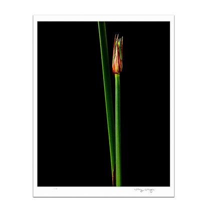 Simple Reed Print