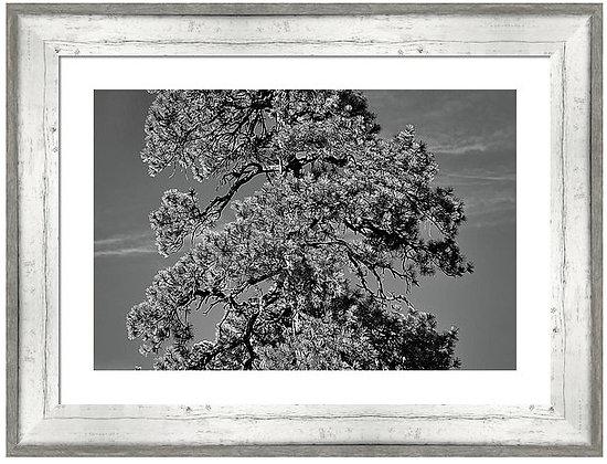 Lone Pine Custom Framed
