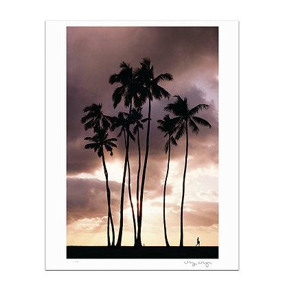 Waikiki Palms Print