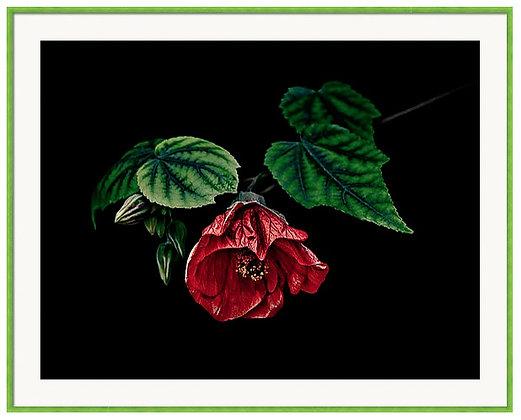 Hibiscus In Repose Custom Framed Print