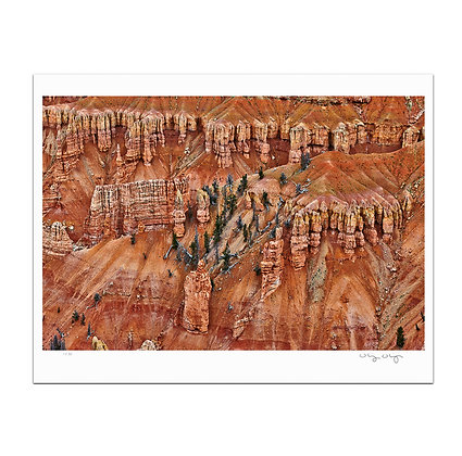 Cliff Pines At Cedar Breaks Print