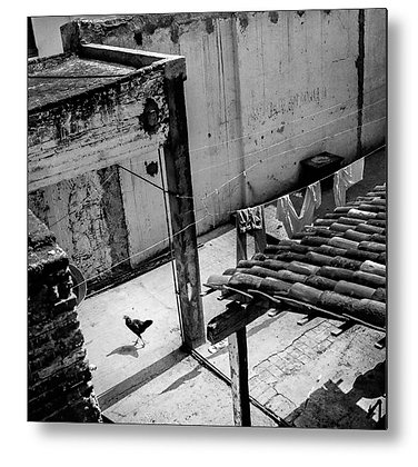Chicken In The Yard Metal Print
