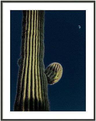 Cactus In The Moonlight Framed