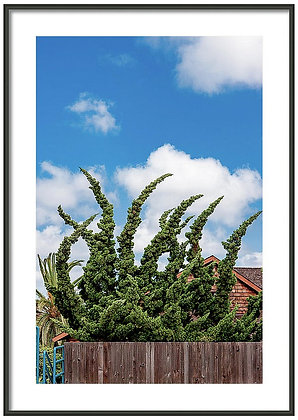 Pointed Hedge Framed