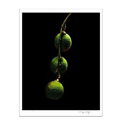 Three Lemons Print