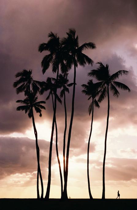 Waikiki palms.jpg