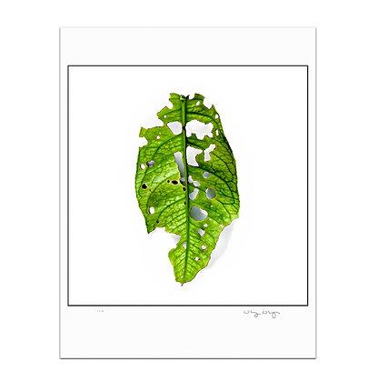 Leaf Leftover Print