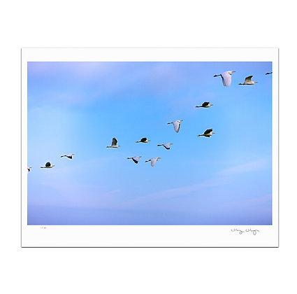 Egrets Return To Parque Juarez