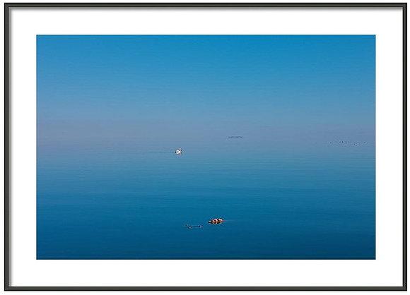 Lone Swan Framed