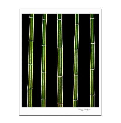 Bamboo Bars Print